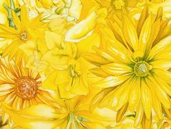 Sunburst vignette yellow #45