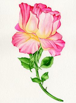 Rose #4 #81