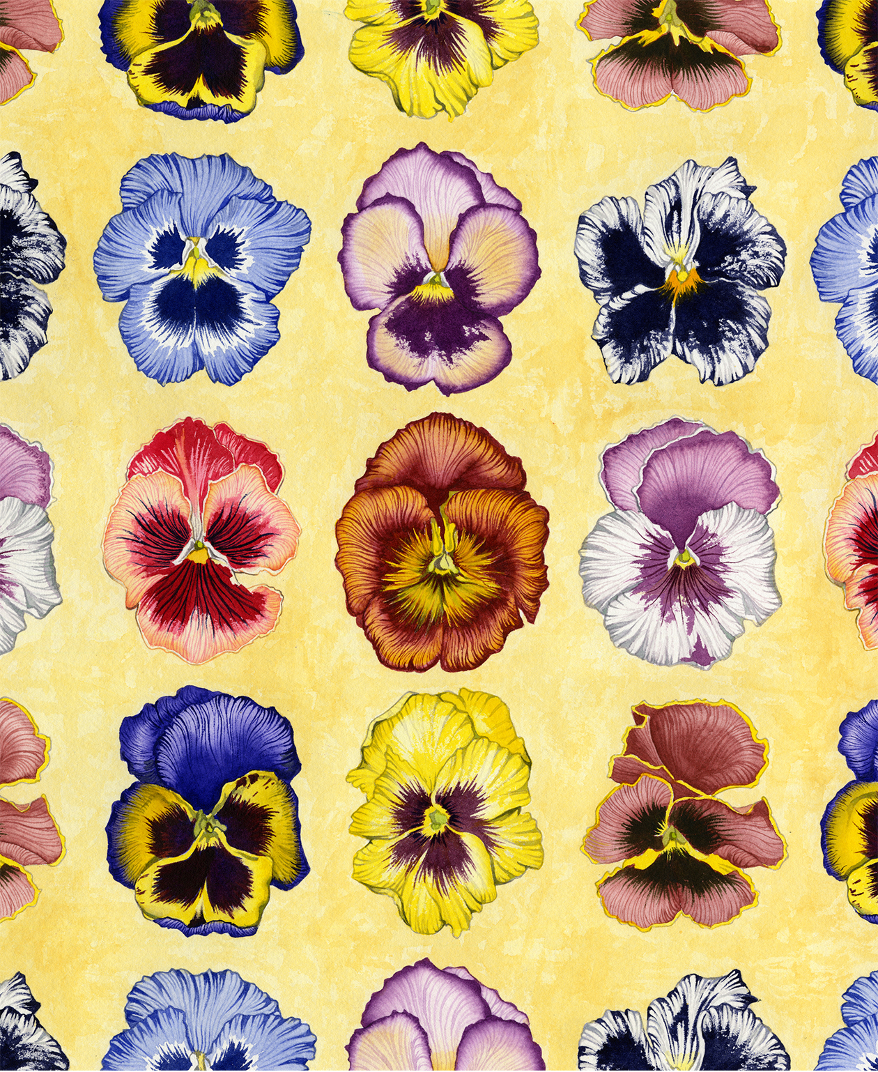 Pansy Clan #79