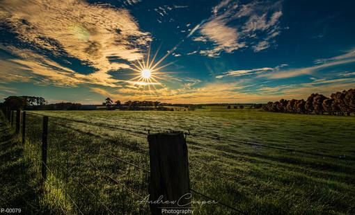 P00079 - Crisp Sunrise