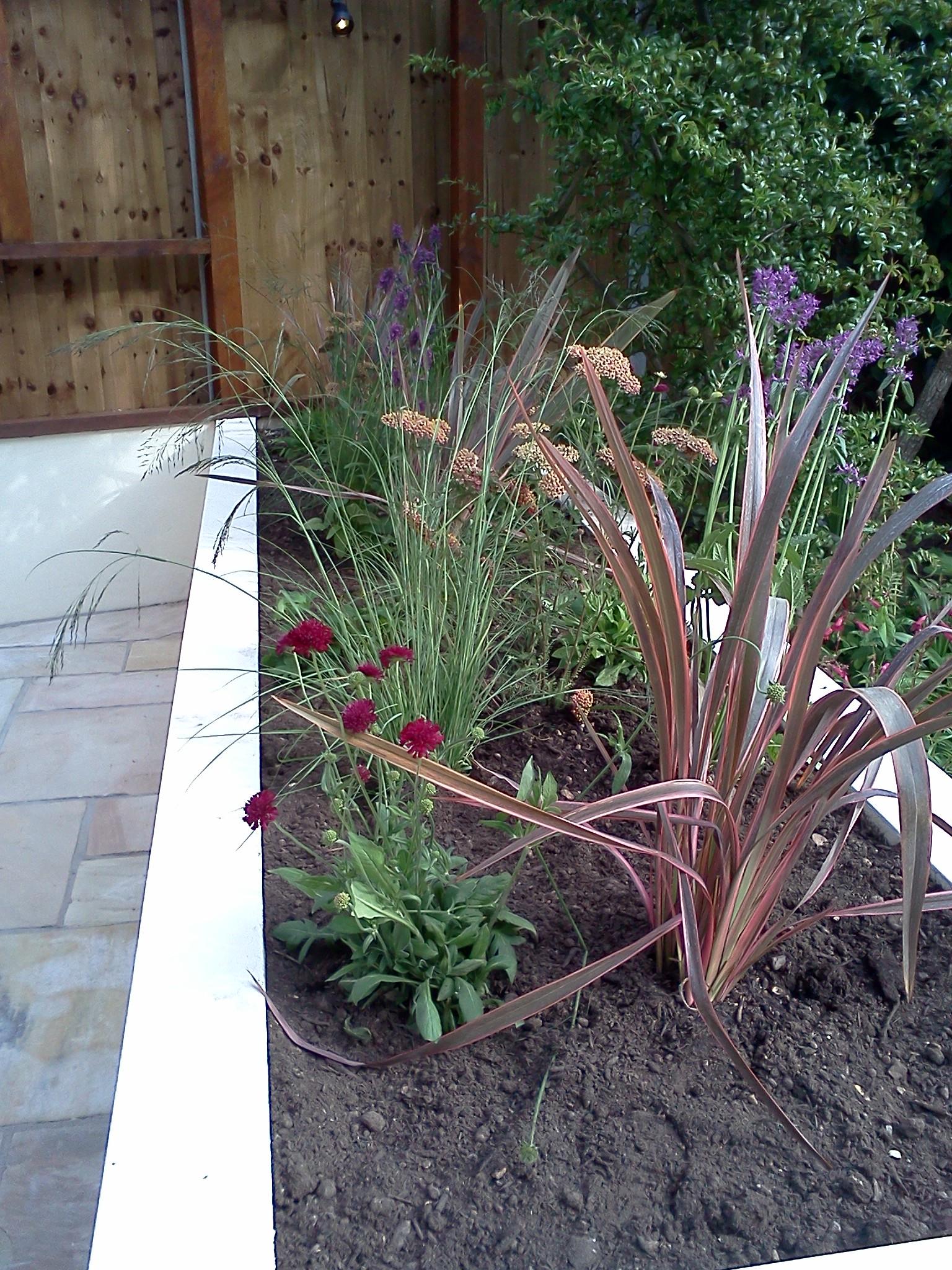Low maintenance planting