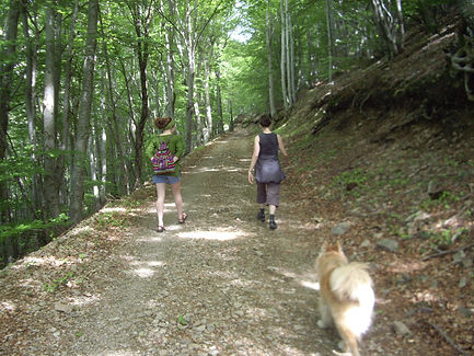 Hiking in Cevenne Mountains