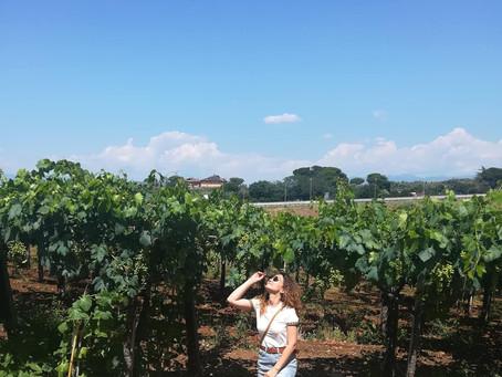 Discover Castelli Romani : Tour di degustazione vini a Frascati con Let's Go!