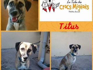 Titus, petit top model