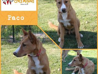 Paco, le plus beau