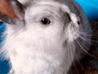 RESERVEE -Nanette, adorable lapinette