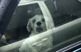 I witnessed a trapped dog in a hot car- the story