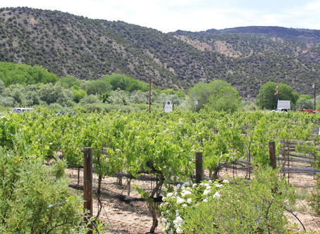 What's the oldest wine producing region in the U.S.?