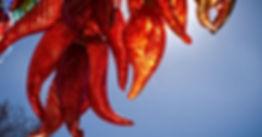 Chilies 2.jpg