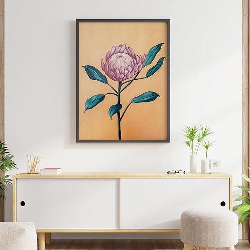 protea (original)