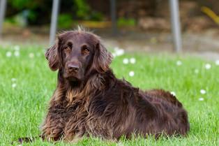 Pet Ownership in Retirement