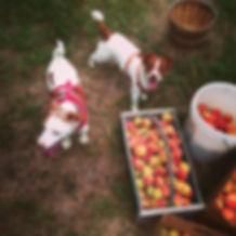 Peaches Farm.jpg