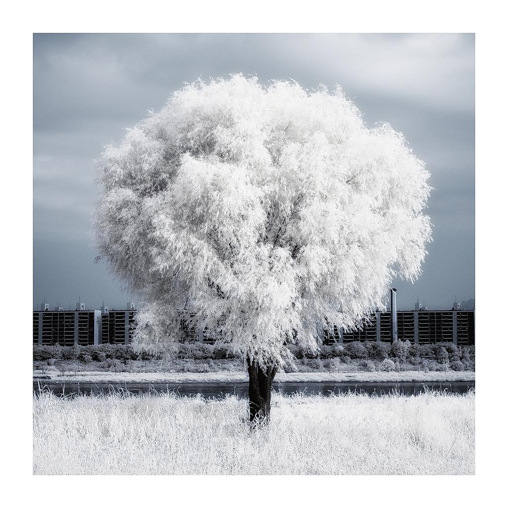 THE TREE 018_C print_60cmx60cm_2013