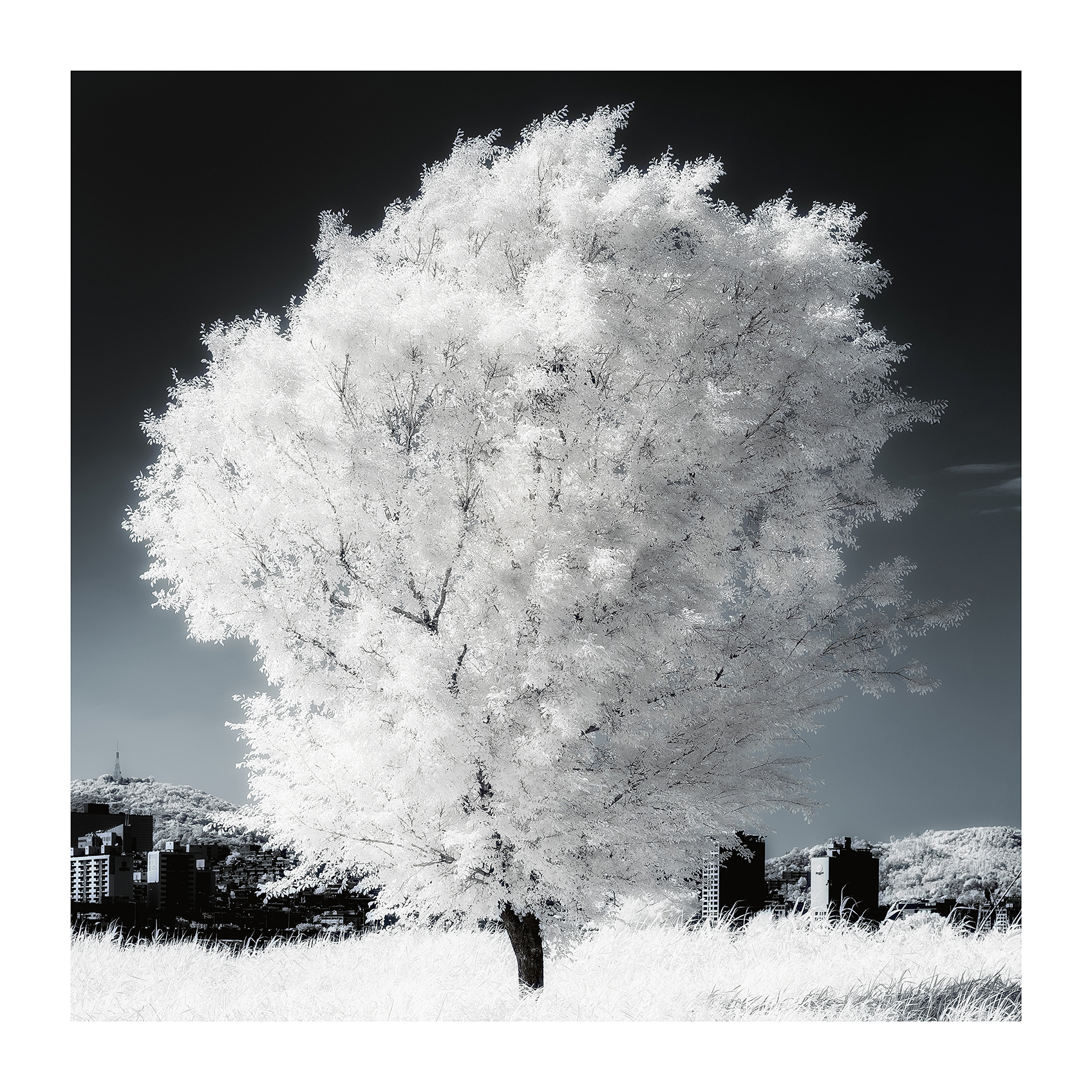 THE TREE 001_C print_60cmx60cm_2013
