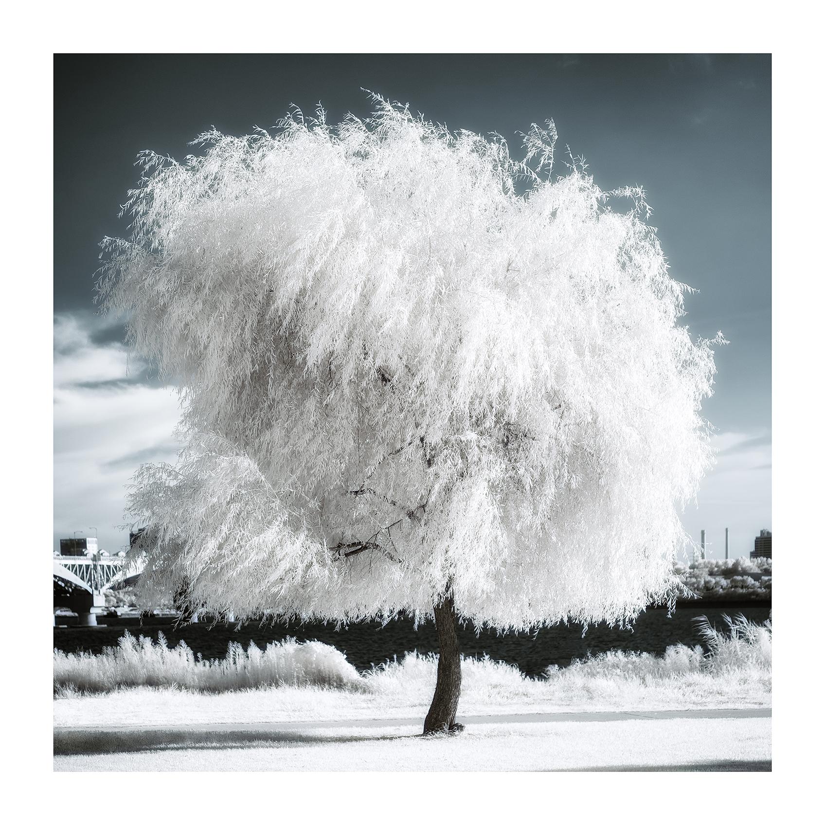 THE TREE 019_C print_60cmx60cm_2013