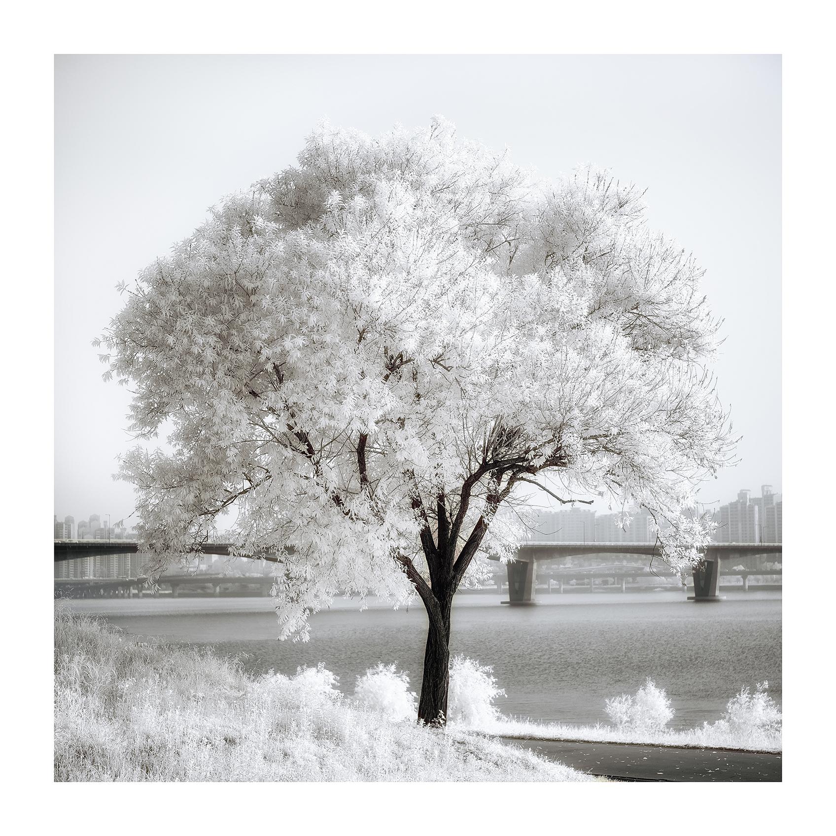 THE TREE 011_C print_60cmx60cm_2013
