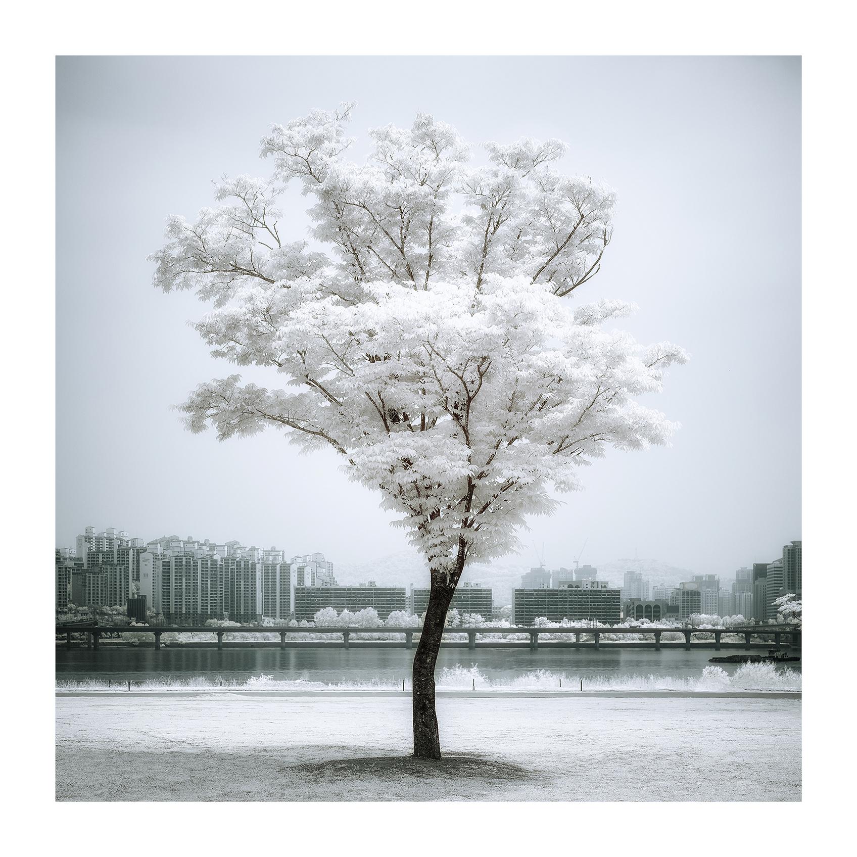 THE TREE 013_C print_60cmx60cm_2013