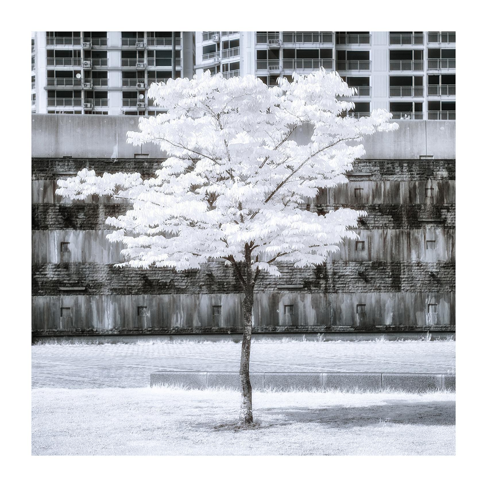 THE TREE 014_C print_60cmx60cm_2013