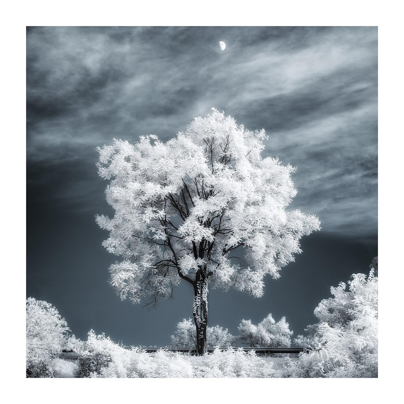 THE TREE 020_C print_60cmx60cm_2013