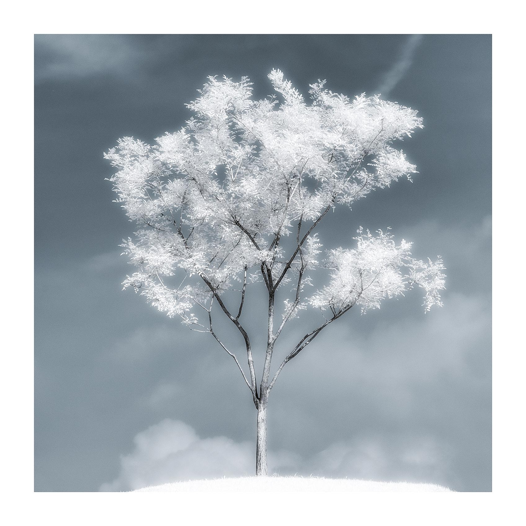 THE TREE 007_C print_60cmx60cm_2013