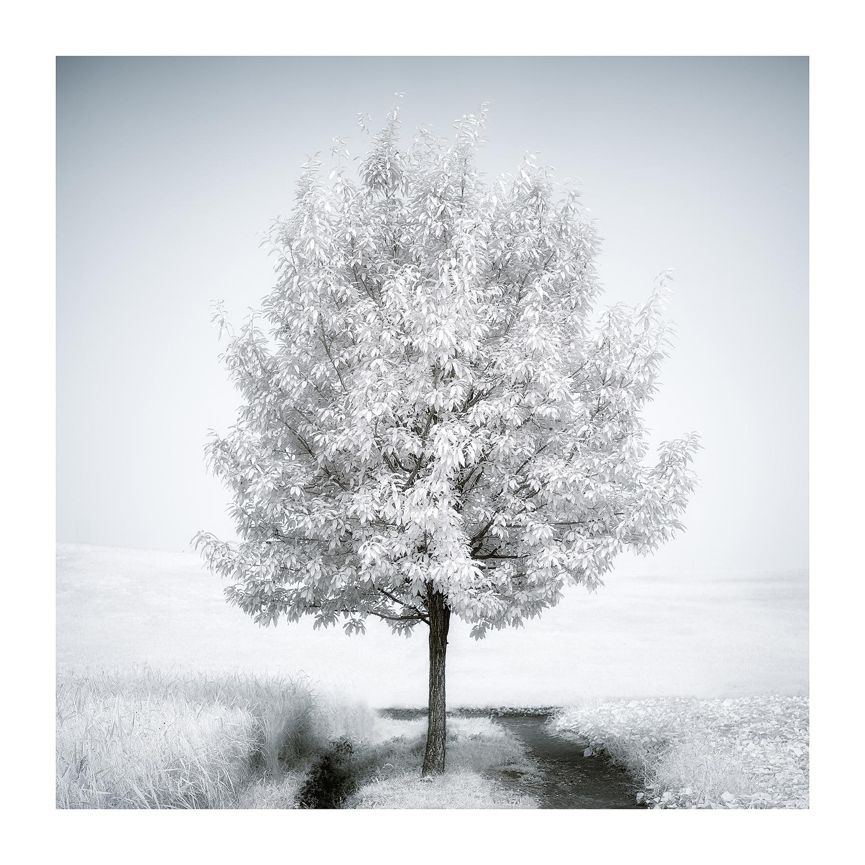 THE TREE 004_C print_60cmx60cm_2013