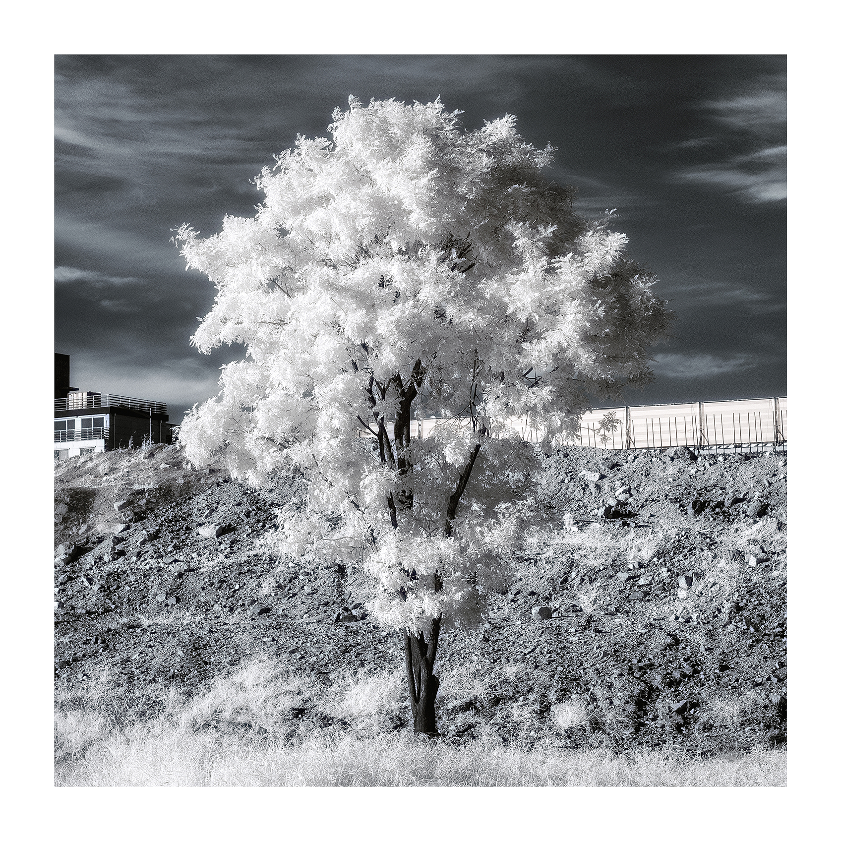 THE TREE 005_C print_60cmx60cm_2013