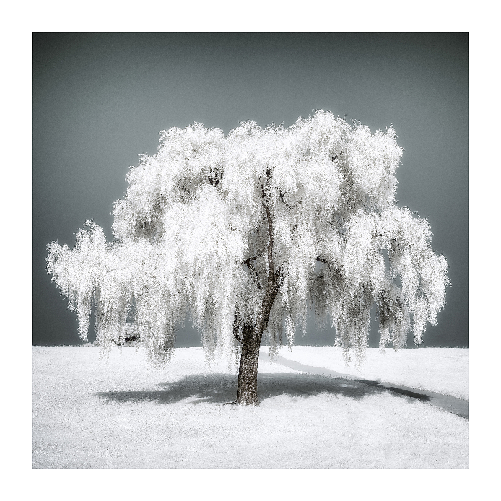 THE TREE 006_C print_60cmx60cm_2013