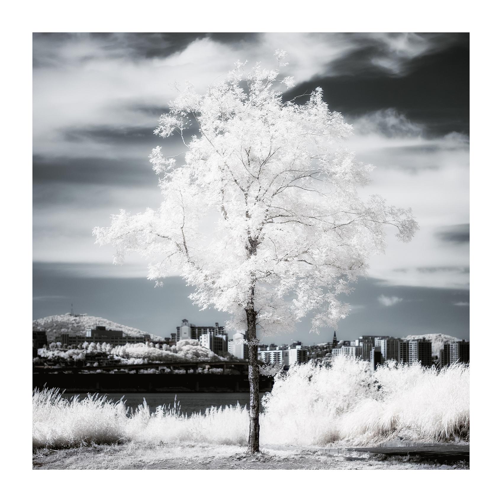 THE TREE 010_C print_60cmx60cm_2013