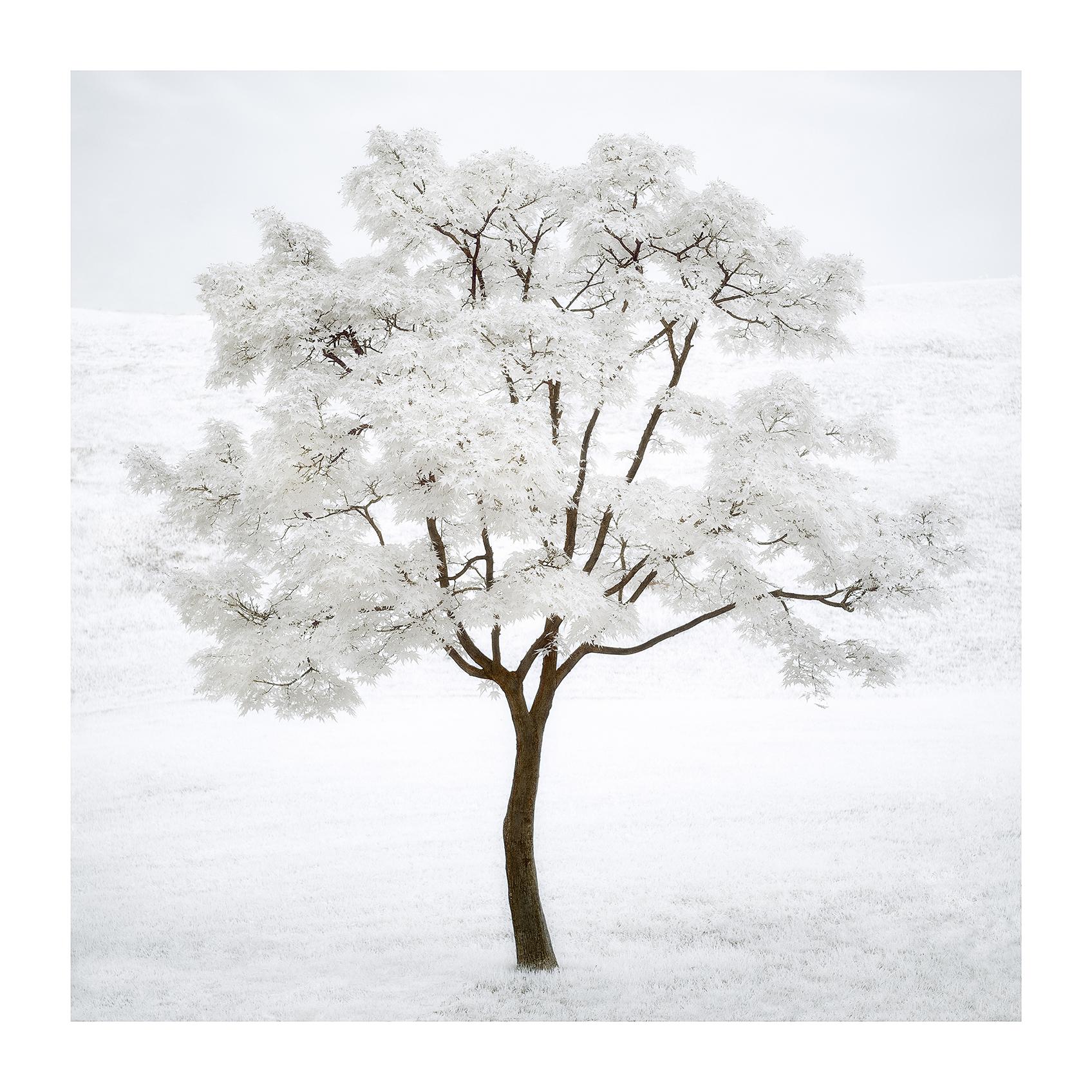 THE TREE 003_C print_60cmx60cm_2013