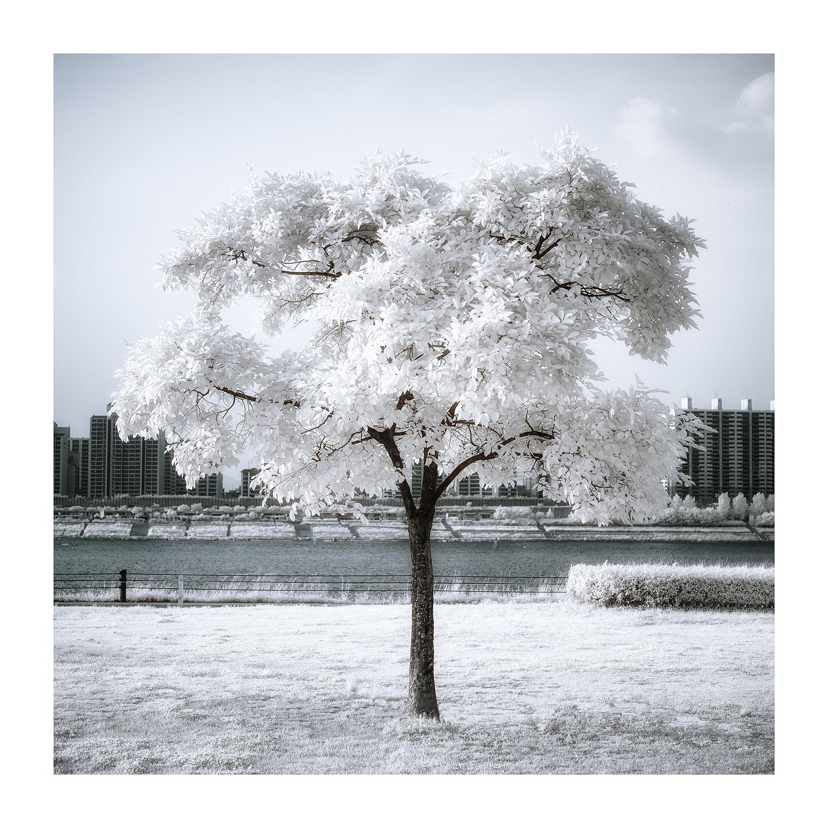 THE TREE 009_C print_60cmx60cm_2013