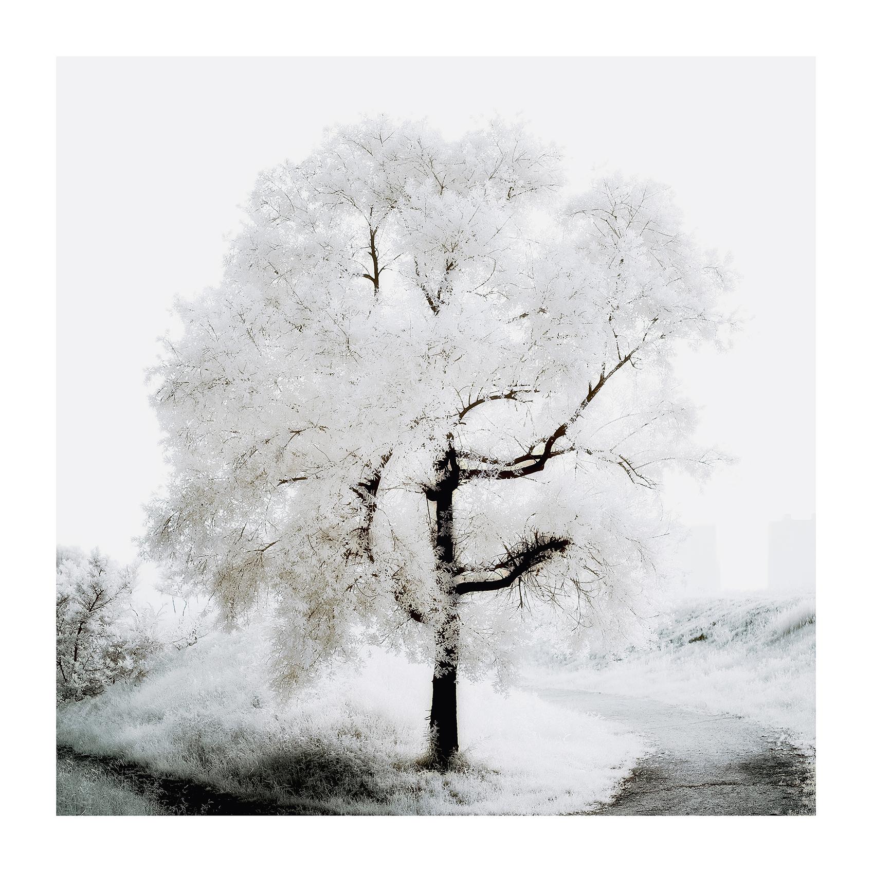 THE TREE 017_C print_60cmx60cm_2013