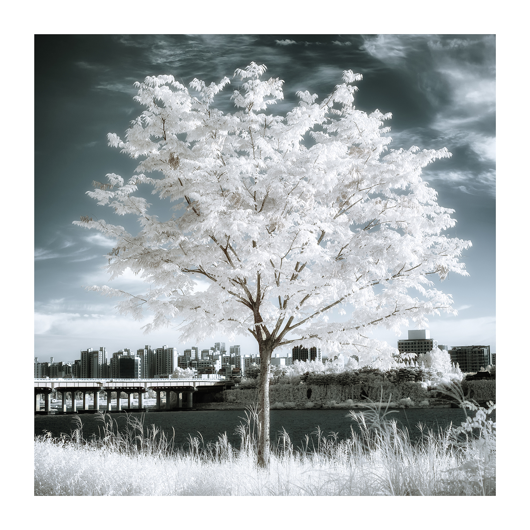 THE TREE 002_C print_60cmx60cm_2013