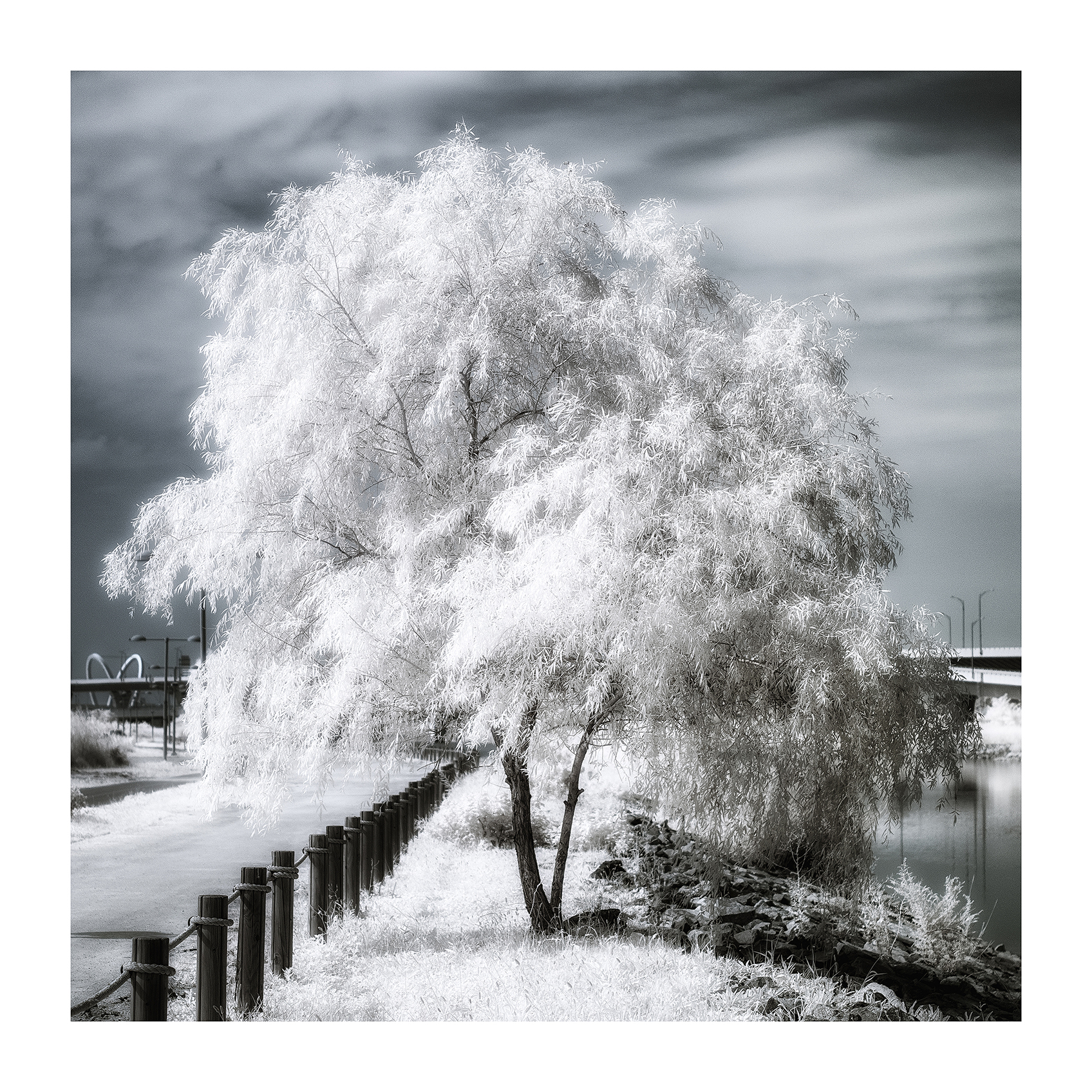 THE TREE 008_C print_60cmx60cm_2013