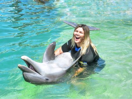 Nadando com Golfinhos: Miami Seaquarium