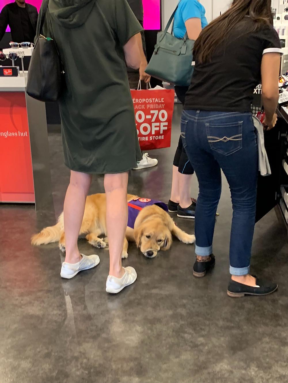 Cachorro em Serviço
