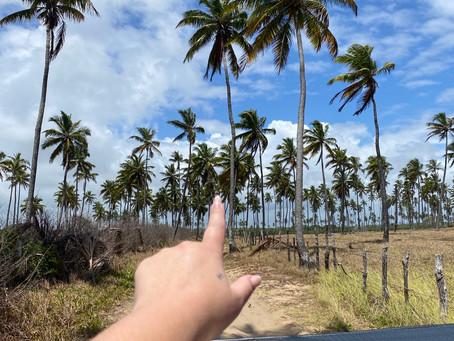 Bate e Volta de Recife para  Porto de Galinhas