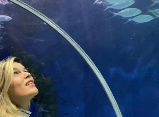 Shanghai Ocean Aquarium - Aquário de Xangai