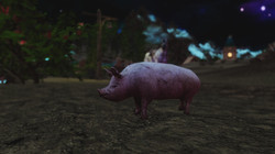 Poogie the Pig Follower