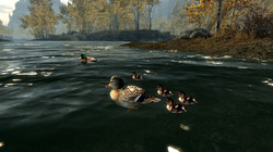 Ducks and Swans for Skyrim