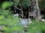 Secret Garden 20-6-18-17.jpg