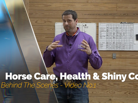 Behind The Scenes - Horse Care, Health & Shine