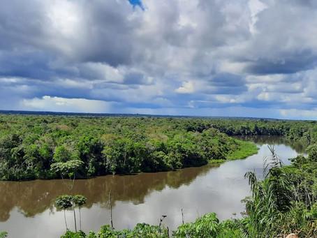 Proyectos REDD+ buscan proteger la biodiversidad de Colombia