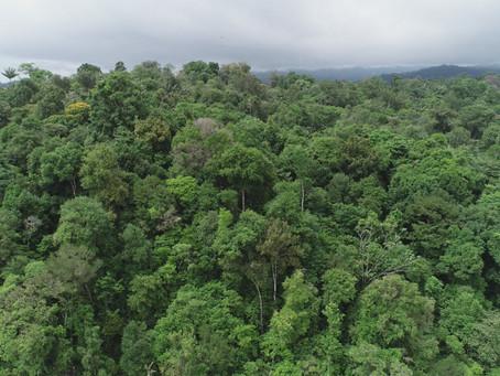 Con 110 mil árboles sembrados, Biofix y Bosque Vivo aportan a la gran Sembratón Nacional