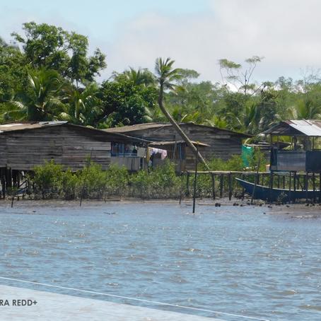 ¿De qué forma se alinean los proyectos REDD+ con los ODS?