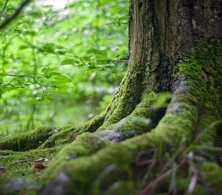 7 Razones para proteger los bosques