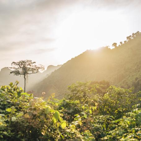 Día internacional del medio ambiente: Restauración de los ecosistemas