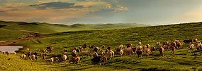Tierhaltung-Mongolei-2.jpg