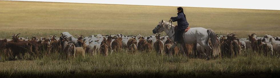 Jurtenleder, Altan, Mongolei, Ziegen Herde