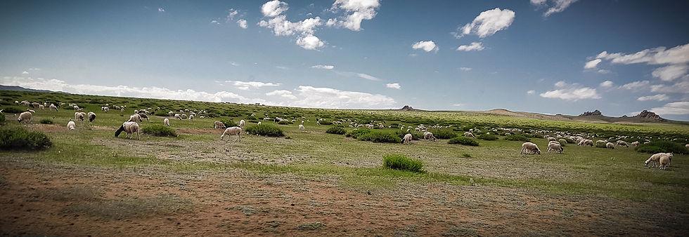 Tierhaltung-Mongolei.jpg