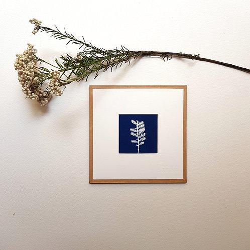 Cyanotype encadré 15x15cm - Plume d'Argent